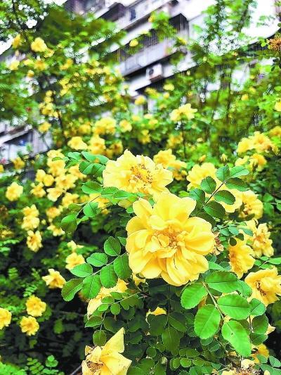 北京公布161种耐旱明星植物